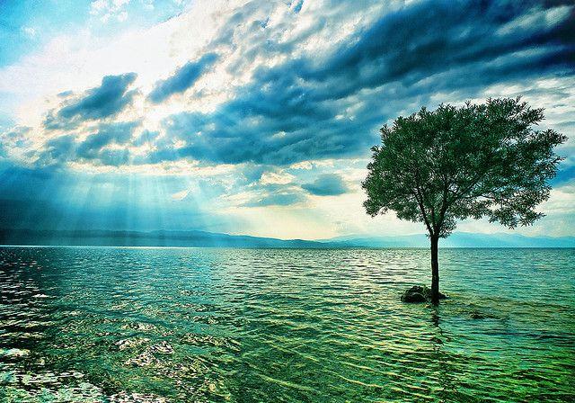 The Lonely Tree. Trpejca, Macedonia