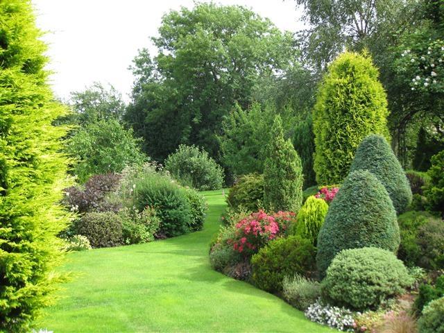 evergreen borders backyard landscaping