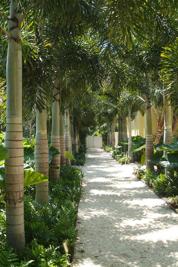 Dwy landscape architects residential landscape for Garden design with palms
