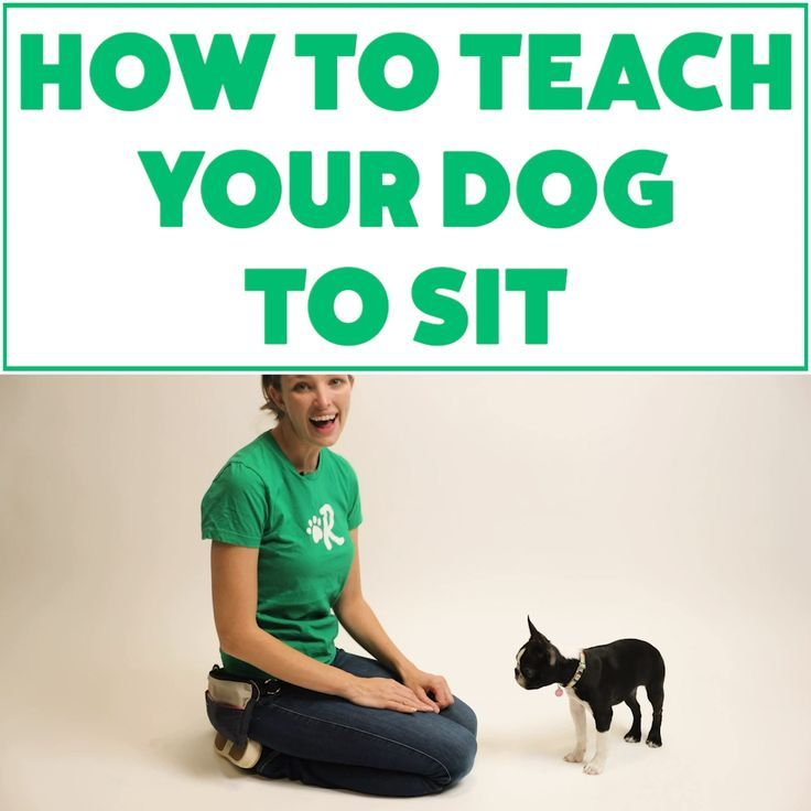 Dog Obedience Training Videos Obedience Training Videos
