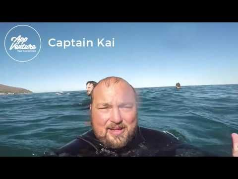 Adrenalised Diving Seal Snorkeling Trip in Cape Town
