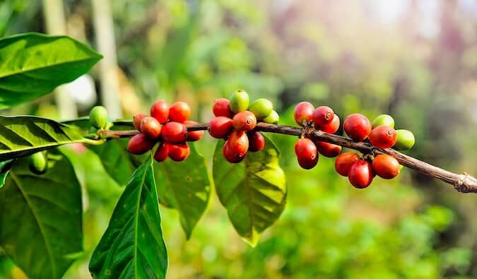 What Are The Benefits Of Caffeine In Skincare Anti Aging Vitamins Skin Care Nourishment