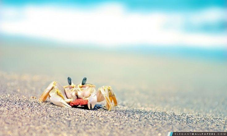 Seul crabe