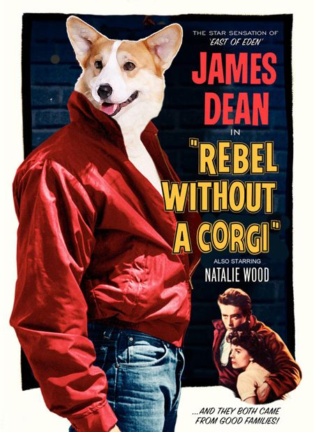 1000 Images About Corgi Movie Posters On Pinterest The