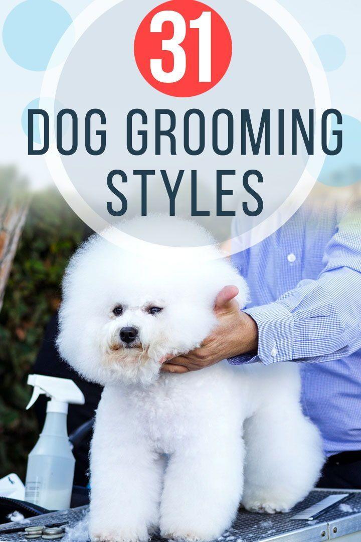 31 Dog Grooming Styles And Trims Playbarkrun Dog Grooming Styles Puppy Grooming Dog Grooming