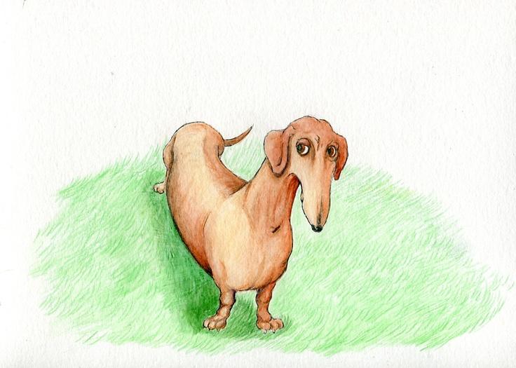 dachshund - Terry Pond