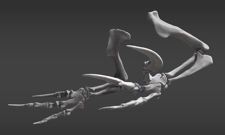 Claws of the Southern Hunter, Raul Ramos on ArtStation at https://www.artstation.com/artwork/australovenator-wintonensis-forelimb