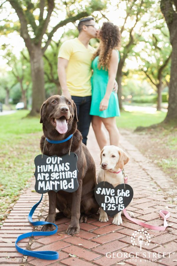Engagement session with dogs wearing save the date signs.