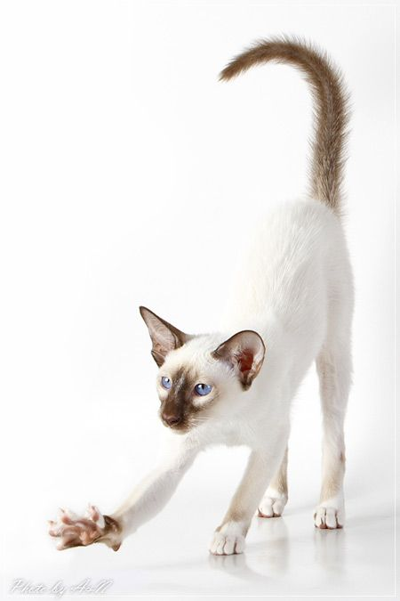 white | weiß | blanc | bianco | blanco | λευκό | белый | सफेद | ホワイト| 白 | pale | color | colors | animal | animals | cat | cats | -----> Like to relax not only visually? Try ASMR ... and visit ... https://www.youtube.com/channel/UCBNHxodKKw1TnoGJogFApTA/videos
