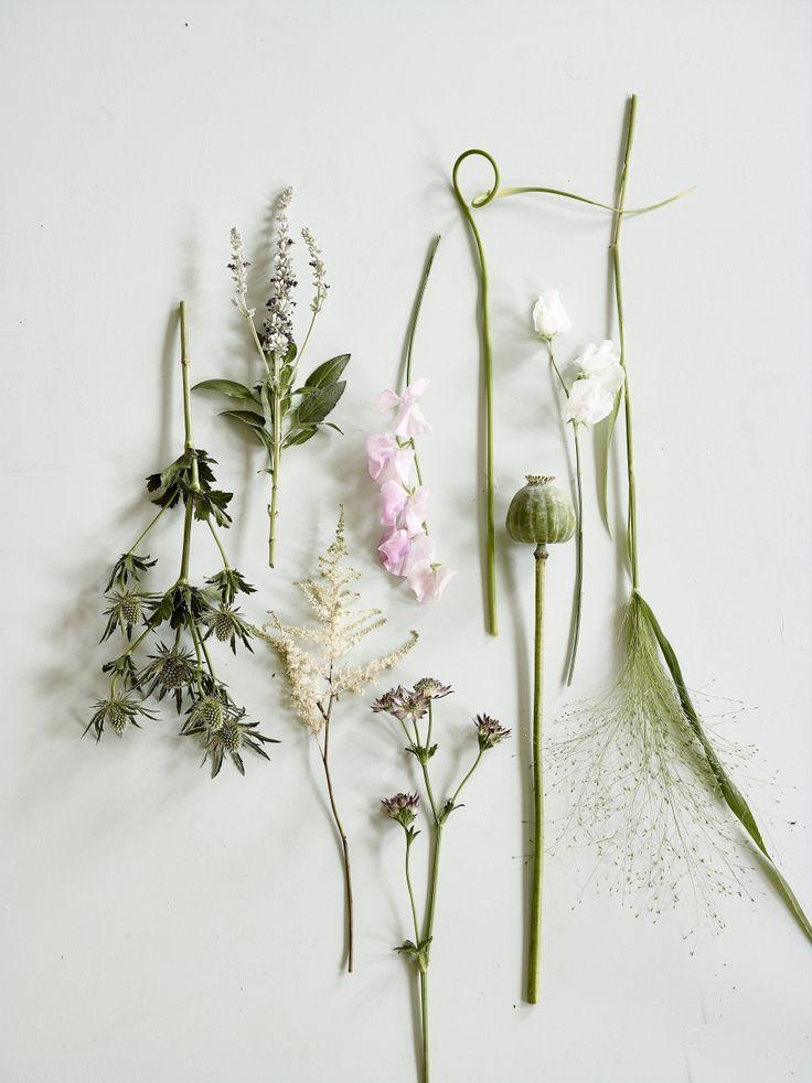 DIY: Botanik i boligen | femina.dk