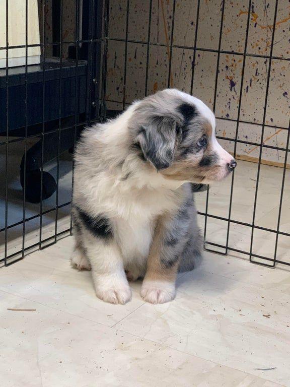 Reddit Meet My Puppy We Take Him Home In 2 Weeks Aww In 2020 Puppies Dog Wallpaper Aww