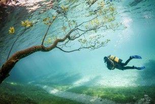 Grüner See. Heel bijzondere duikervaring, bankje, bruggetje, grasland, bomen...onder water.