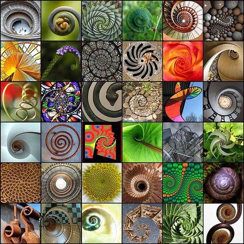 Education Joyeuse : Les spirales, de la nature à la géométrie