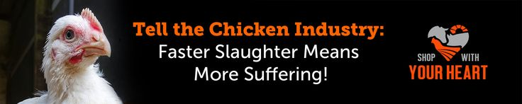 Sign:  Tell Chicken Industry: Faster Slaughter Means More Suffering!   ASPCA…