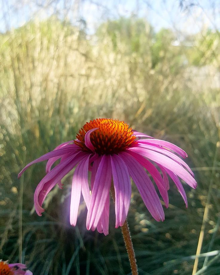 I Am So Exhausted Right Now Spiritualy Mentally And Physically Photography Naturephotography Natu Flowers Photography Purple Flowers Nature Photography