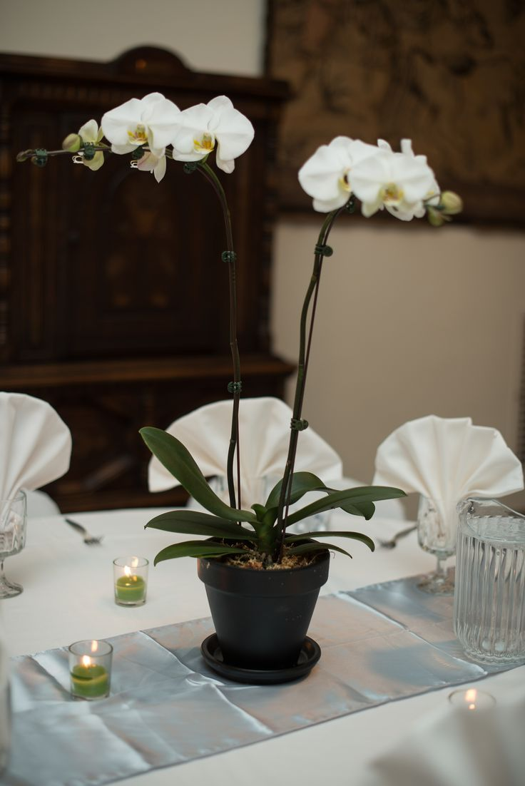 Orchid Centerpiece Near Me : Best ideas about potted orchid centerpiece on