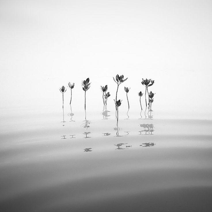 Mangrove Rhythm - Long Exposure Photography
