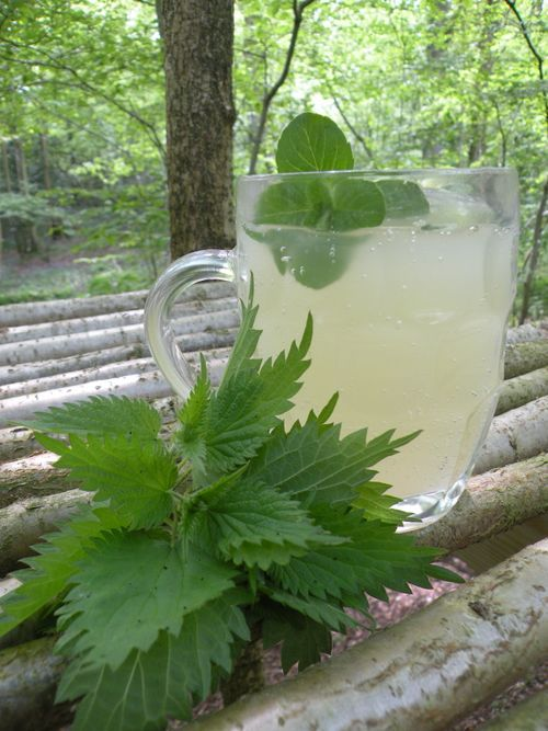 Home brew nettle wine This I must try! Love the flavor of nettles so much...
