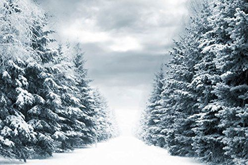Amazon.com : 8x8ft Natural Scenery Photography Background Frozen Snow Winter Fantasy No Wrinkles Cedar Backdrops For Photography : Camera & Photo
