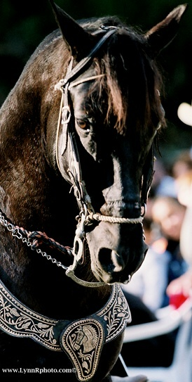 #majestic.  The tack is beautiful, too.    -  http://wp.me/p291tj-e6