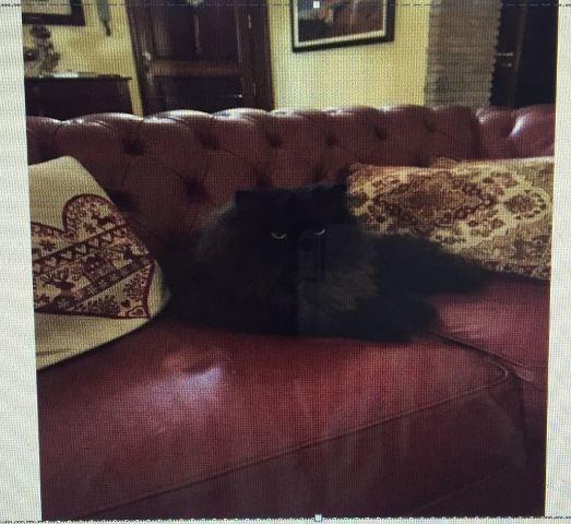 E' un gatto persiano nero, bellissimo, con occhi gialli e di 4 anni. E' scomparso da oltre 24 ore e nonostante le ricerche non è stato possibile trovarlo. Artù si è smarrito a Tremestieri, nella zona della Chiesa di Santa Domenica. Il gatto necessita di cure, prende alcuni farmaci ed è indispensabile per i suoi padroni ritrovarlo e portarlo a casa. Chi lo ha visto può contattare il 339 7499628 oppure 3338036242 Condividi Twitter Google+ Pinterest SkypeCondivisioniCommenta tramite Facebook…