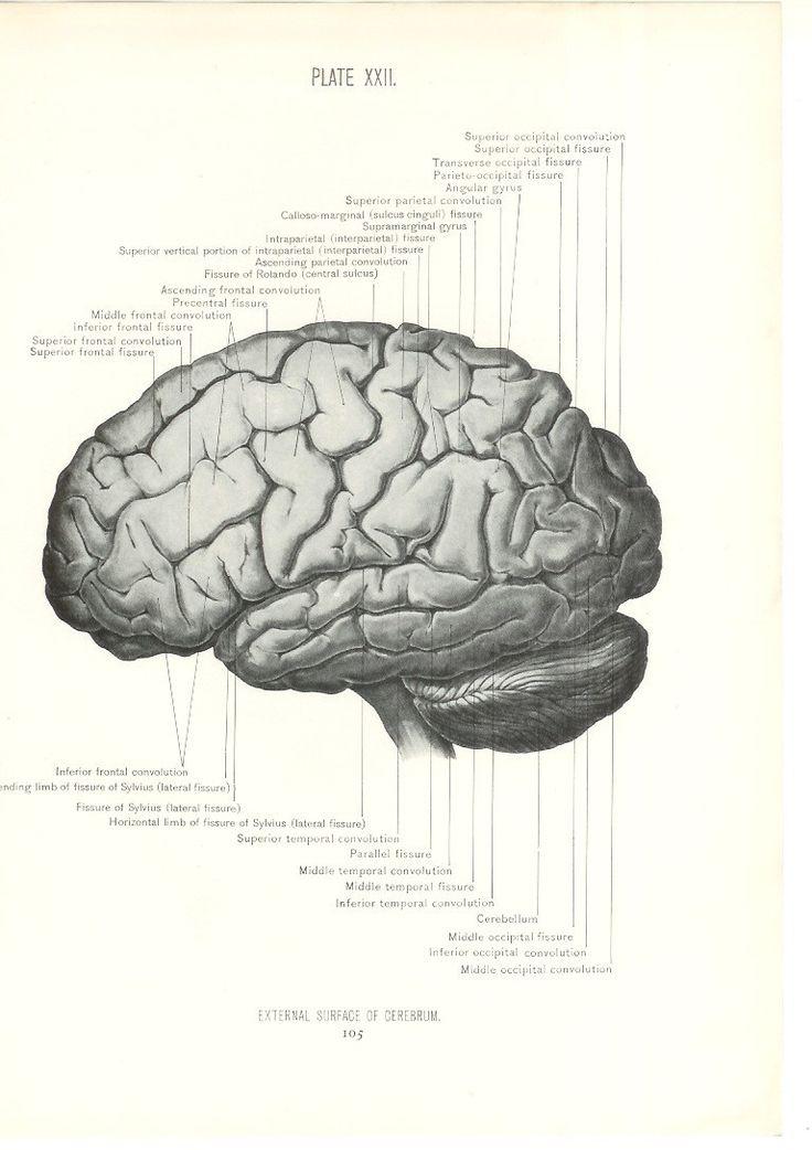 20 best Vintage Science Illustrations images on Pinterest | Science ...