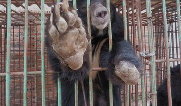 Save The Halong Bay Bears PETITION - Care2 News Network