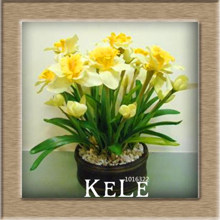 New Fresh Seeds Beautiful Narcissus Flower Balcony Plants Daffodil Seeds Absorption Radiation Narcissus Tazetta Seeds,100 Pieces