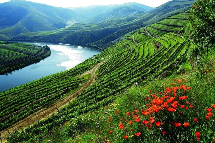 Welcome to Douro Valley - North of Portugal Enjoy your holidays in Portugal https://www.facebook.com/enjoyportugalcountry