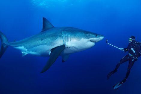 Wat te doen bij een aanval van een haai. Zeer interessant om eens te lezen! Hopenlijk hoeven we het nooit mee te maken