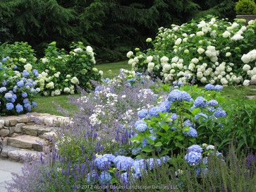 A Tranquil Blue And White Garden Reminiscent Of The Relaxed Landscape  Styles Of Beach Front Estates Incorporates Endless Summer U0026 Annabelle  Hydrangeas With ...