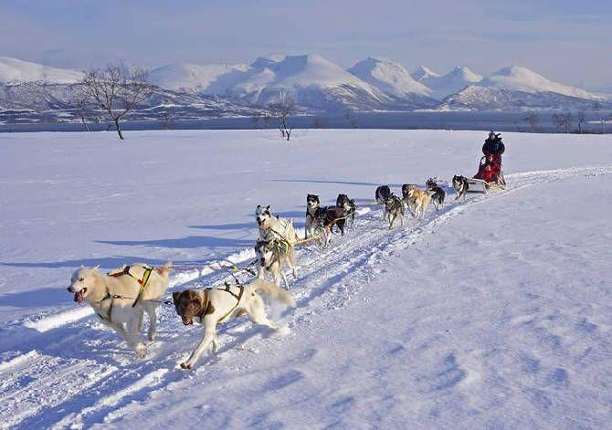 Экскурсия в питомник ездовых собак, катание на собачьих упряжках