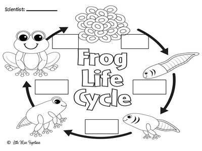 31 best Preschool Theme: Frogs images on Pinterest
