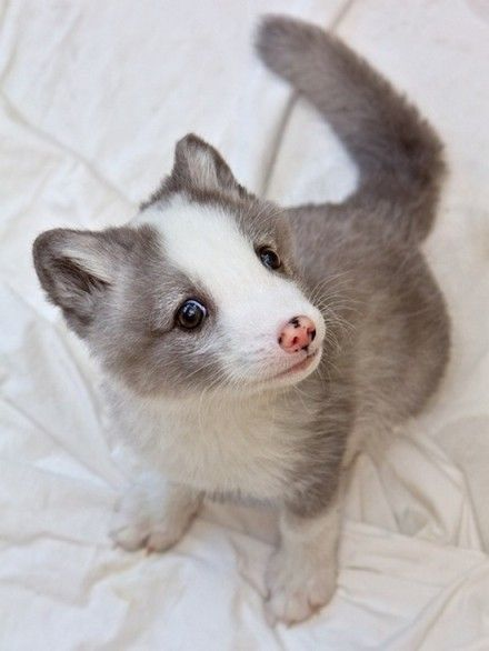 cute baby animals ever | ... baby animal pictures, featuring the cutest babies you've ever seen