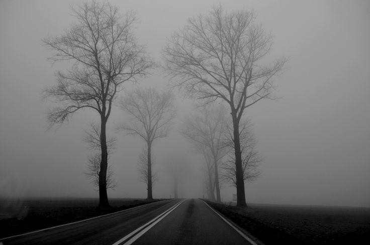 Road; trees, fog