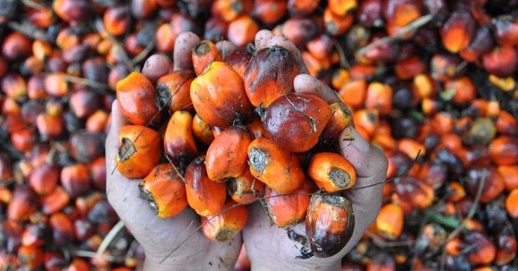 10 cosas sobre el aceite de palma para conocerlo mejor