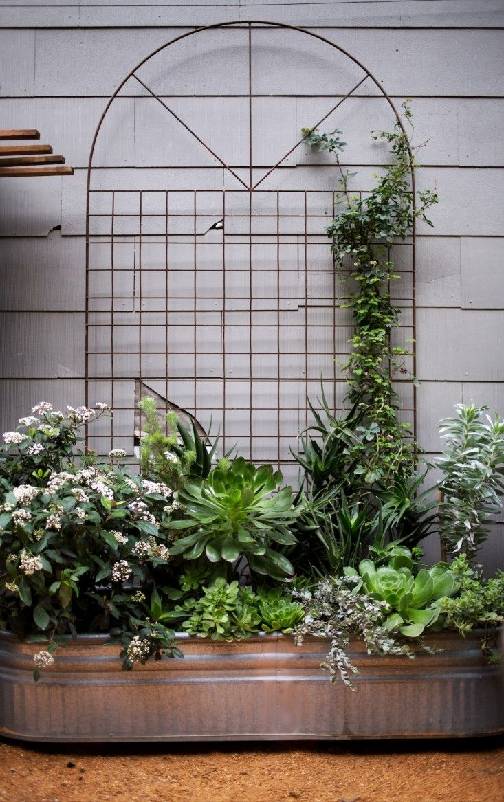 Mounted metal trellises against the wall of an adjacent building to create a backdrop for instant container gardens. Screen for transformer? via Gardenista