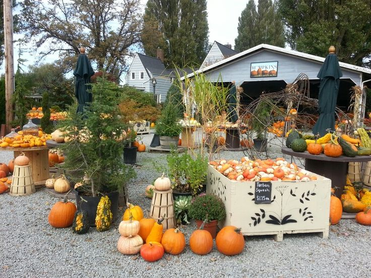 1000 Images About Pumpkin Festivals On Pinterest Pumpkins Pumpkin Farm And Farms