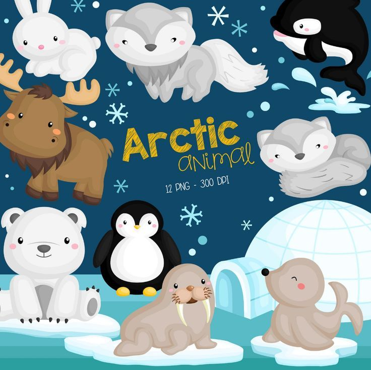 Arctic Animal Clipart Cute Animal Clip Art Wild Animal Etsy In 2020 Animal Clipart Cute Doodles Drawings Arctic Animals