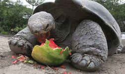 San Diego Zoo Tumblr Blog - The Shorty Awards