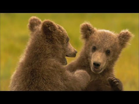 Caught On The Web: learn something about grizzly bears; http://caughtontheweb.blogspot.com/2016/07/learn-something-about-grizzly-bears.html