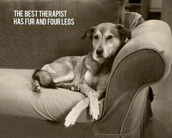 The best therapist has 4 legs and 4 paws..