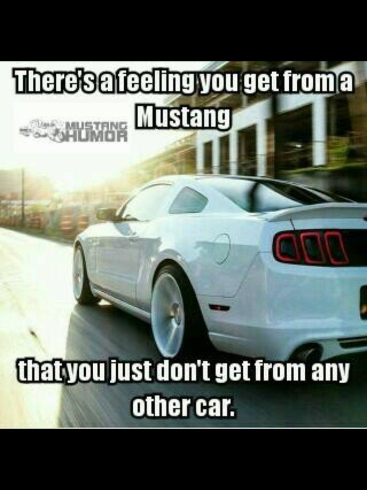 Best Funny Car Quotes Images On Pinterest Funny Car Quotes