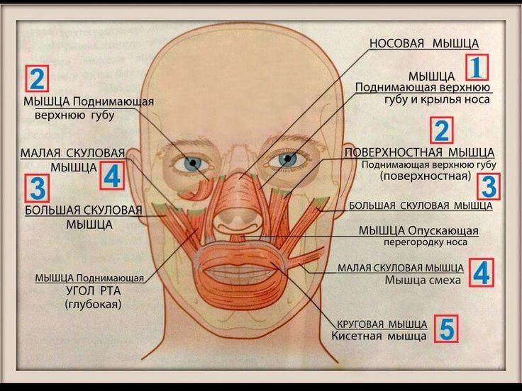 Факторы, провоцирующие появление носогубных складок. Гипертонус мышц как причина появления носогубных морщин. Как избавить от носогубных складок – эффективные методы.