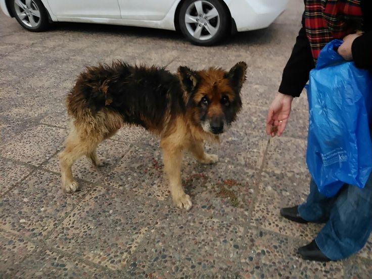Perro abandonado necesita de ayuda veterinaria en playa bellavista de Tome.
