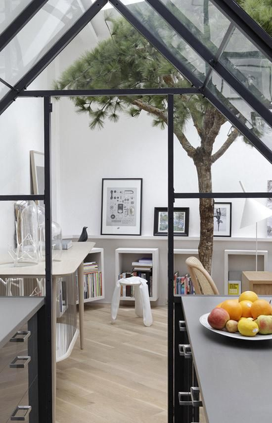 Kitchen atrium and indoor spruce.