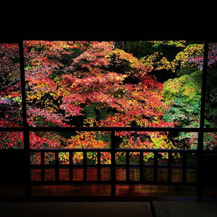 """これからの季節、見頃を迎える""""紅葉""""。""""紅葉""""といえば、色づいた木々を歴史ある風景がより情緒たっぷりに魅せてくれる古都・京都が人気ですよね。京都には数えきれないほどの紅葉の名所がありますが、中でも人気のスポットが「瑠璃光院」。秋が深まり肌寒くなってきた頃、美しい紅葉を見に京都へ出掛けてみてはいかが?"""