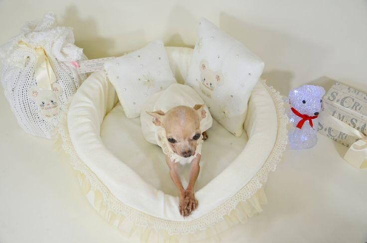 Grace Graciola non è solo un #brand, ma una storia di amorevole aiuto verso il proprio #Chihuahua <3