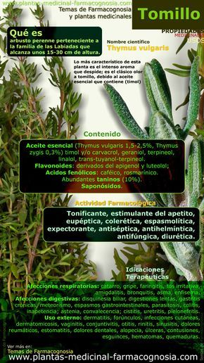 Tomillo. Infografía. Resumen de las características generales de la planta del Tomillo. Propiedades, beneficios y usos medicinales más comunes del Tomillo (Thymus vulgaris). http://www.plantas-medicinal-farmacognosia.com/productos-naturales/tomillo/beneficios-infografia/