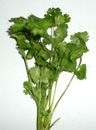 "Cilantro  no cholesterol;  rich in antioxidants, essential oils, vitamins, and dietary fiber, helps reduce ""bad cholesterol"" while increasing  ""good cholesterol"" levels.  good source of potassium, calcium, manganese, iron, and magnesium.  rich in  folic-acid, riboflavin, niacin, vitamin-A, beta carotene, vitamin-C"